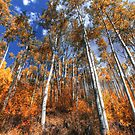 Aspen Grove 3 by greg1701
