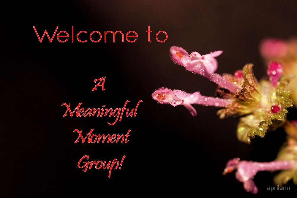 Banner - AMM - Welcome by aprilann
