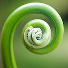 Spirals - fern frond by Jenny Dean