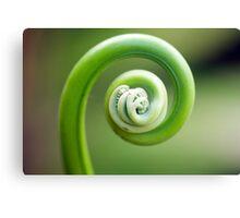 Spirals - fern frond Canvas Print
