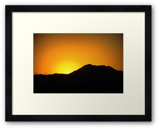 Morning Glory in Marana by Kimberly Chadwick