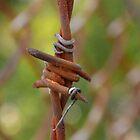 Barbed Wire by rosaliemcm