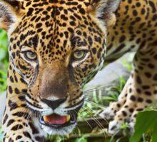 Stalking Jaguar - Costa Rica Sticker