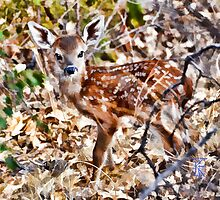 BB Fawn Caught by Surprise by jkgiarratano