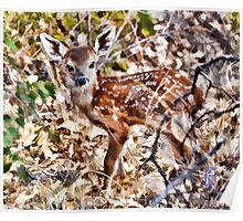 BB Fawn Caught by Surprise Poster