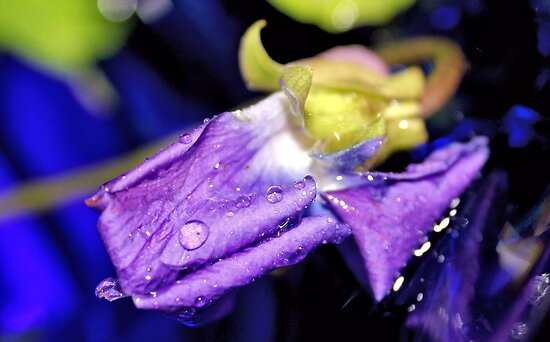 Lavender Tears by aprilann