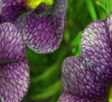 Purple petunias Sticker