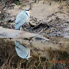 A heron reflection by pater54