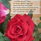 Rose in Rain by Anne van Alkemade