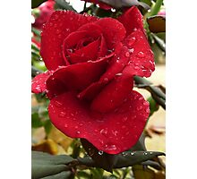 Rose with raindrops Photographic Print