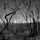 Scary Trees- Sampson Flat Bushfire 3 by Ben Loveday