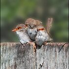 Our Baby Wrens by Helenvandy