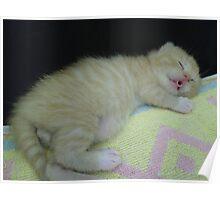 litte ginger cat Poster