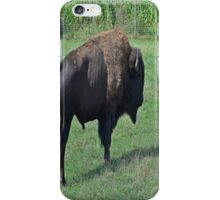 American bison iPhone Case/Skin