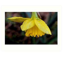 The First Daffodil Art Print