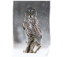 Great Gray Owl in Heavy Snowfall Poster