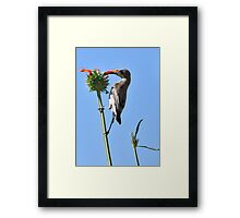 Measuring! Framed Print