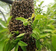Swarm of bees by Marina Kropec