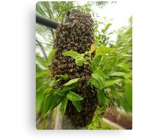 Swarm of bees Canvas Print