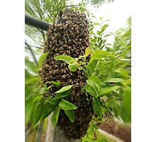 Swarm of bees Photographic Print