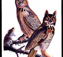 First American West  The Ohio River Valley, 1750-1820 - Great horned owl by Adam Asar