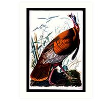 First American West  The Ohio River Valley, 1750-1820 - wild male Turkey Art Print