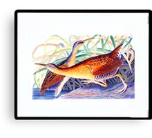 Great Red-breasted Rail or Fresh-water Marsh Hen Canvas Print
