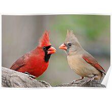 Redbird Encounter  Poster
