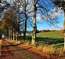 Walking through autumnal fields by jchanders