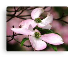 Dogwood A Gift Of Spring Canvas Print