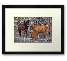 Furry Colts Framed Print