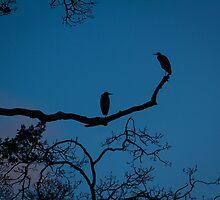 Heron Pair by BarryHetschko