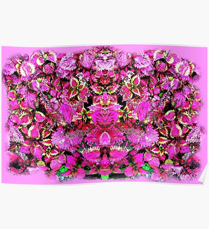 Mirrored Coleus Poster