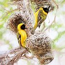 'Golden Light - African Masked Weavers' by steve morvell