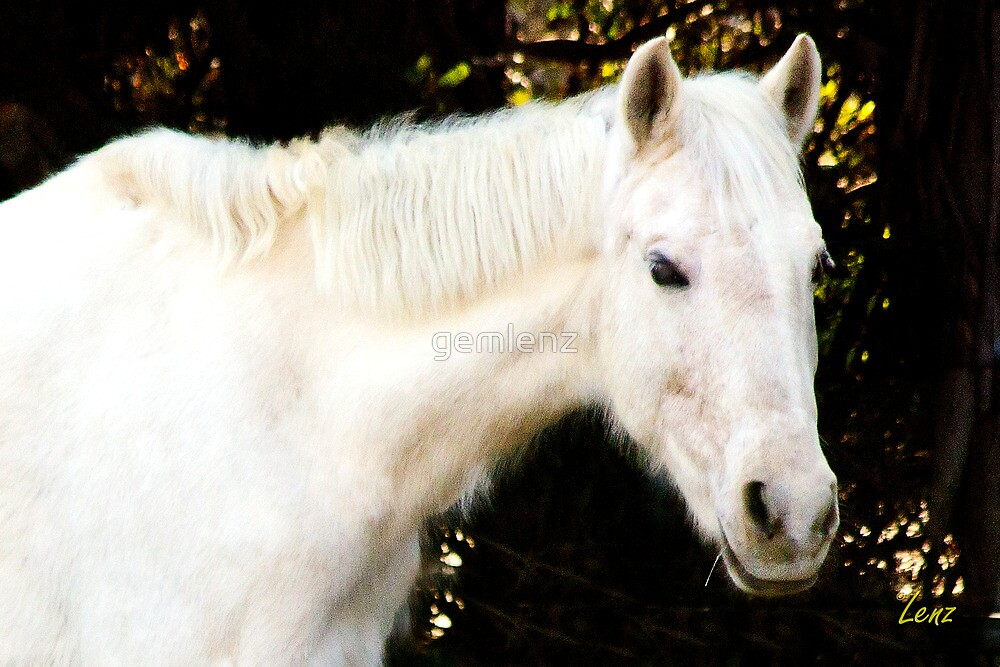 White Horse by George Lenz