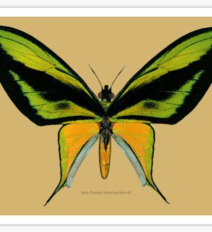 Male Paradise Birdwing Butterfly Sticker