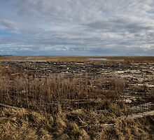 Boundary Bay Salt Marsh #1 by Dave Ingram
