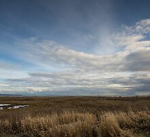 Boundary Bay Salt Marsh #2 by Dave Ingram