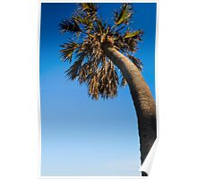 palm Poster