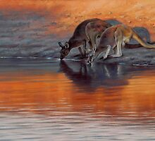 'Dusk - Red kangaroo and Western grey kangaroo' by steve morvell