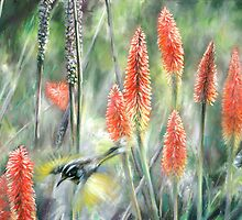 'Red hot feeding-New Holland Honeyeaters' by steve morvell