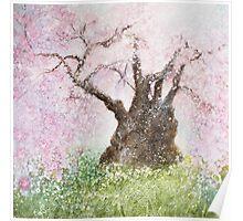 Jindai Zakura (2000 year-old cherry tree) Poster