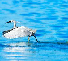 Great white Heron by JeanNieman