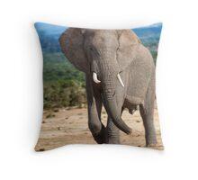 Big male Elephant Throw Pillow