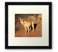 Ringo the Dingo Framed Print