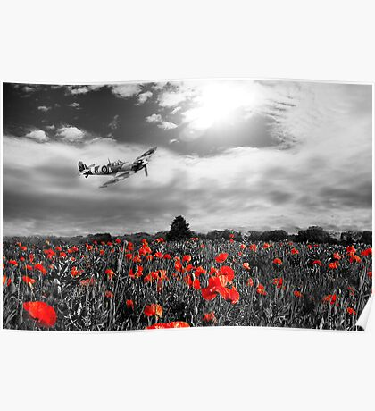 Field of Red Poster