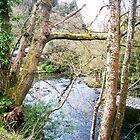 Afon Llugwy at Betws-Y-Coed. by LADeville