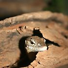 Lizard in Bark by Jennifer Vollebregt