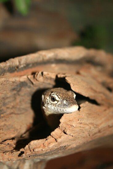 Lizard in Bark by Jennifer Standing