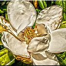 Magnolia Blossom number 1 by Joe Bledsoe